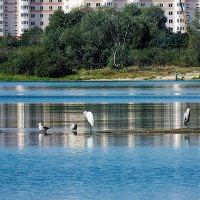 островок на заливе :: prokyl