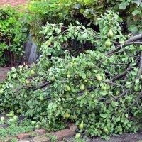 Смерть дерева :: Владимир Болдырев