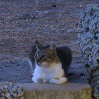 Кошка :: Герович Лилия