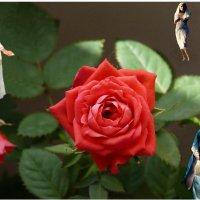 Розы любьви_2 :: irina Schwarzer