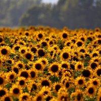 Кому не хватает солнца? :: Роман Воронцов