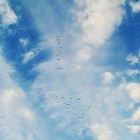 Стая птиц в небе :: Татьяна Королёва
