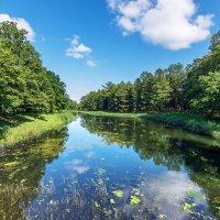 Зарастающее озеро :: Сергей Добрыднев