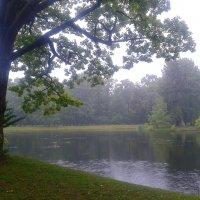 Туманный дождь :: Сапсан