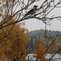 Пейзаж с вороной. :: rimma ilina