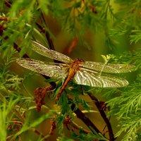 крылья среди зелени :: Александр Прокудин