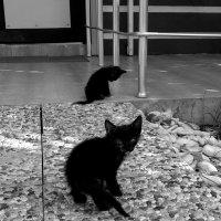 Котенок по имени Гав :: Юлия Закопайло