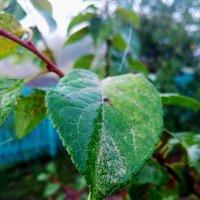 Листок после дождя :: Татьяна Королёва