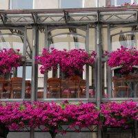 В цветах .. :: Алёна Савина
