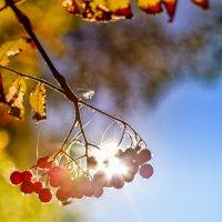 Наступает осень :: Наталия Горюнова