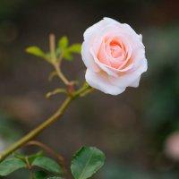 нежно-розовая осень :: StudioRAK Ragozin Alexey