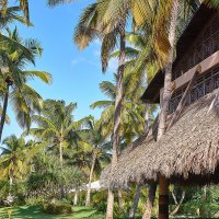 Пальмовый рай. :: Savl