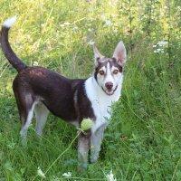 Жизнерадостный пес) :: Алла Качуро