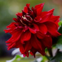 Цветы ещё радуют. :: Татьяна Помогалова