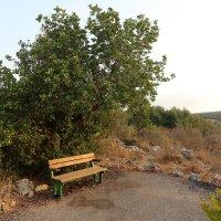 скамейка в парке :: vasya-starik Старик