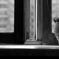 окно :: Сергей Полянский
