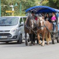 лошадиные силы :: Дмитрий Карышев
