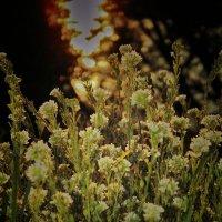 ...лето на исходе... :: Lilek Pogorelova