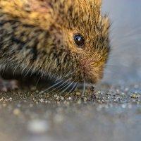Мышь и муравей :: Юрий Бичеров