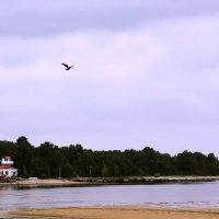 Пляж :: Alexandra G.