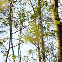 Деревья :: Ксения Протасова