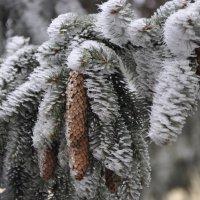 Зима :: vovan