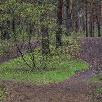 Лесной зелёный островок. :: Михаил Полыгалов