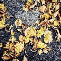 Осень :: Лариса Журавлева