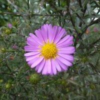 Осенние цветы... :: Наиля
