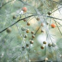 Осенняя фантазия :: Алена Афанасьева
