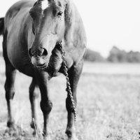 HORSE :: Diana Vopseva
