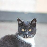 Уличный котик :: Ксения Трифонова