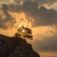 Одинокое дерево. :: Юрий
