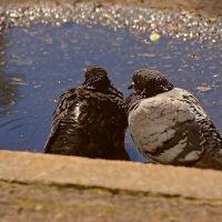 двое :: linnud