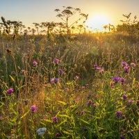 Солнечное утро :: Наталия Горюнова