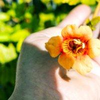 Цветок на ладони .... :: Aleks Ben Israel