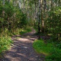 лесной тропой... :: Валентина. .