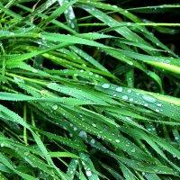 Плачущие травы :: Светлана