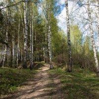 Лес весной. :: Владимир Безбородов
