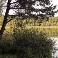 вид на озеро :: оксана