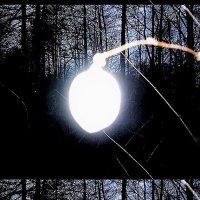 Веточка лунная :: Валерий Розенталь