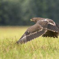 Дотронуться до травы ... :: Ramunas Einoris