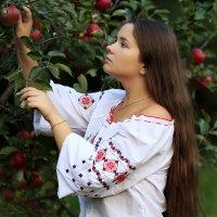 Поспели яблочки в саду,у дяди Юры!!! :: Наталья Малкина