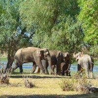 """""""Старший""""слон следит за порядком в своем семействе. :: Евгений Кузнецов"""