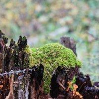 В лесу! :: Ирина Антоновна