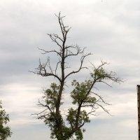 дерево :: Екатерина