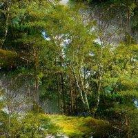 Прозрачный лес :: Nina Yudicheva