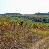 Брошенный виноградник :: Владимир