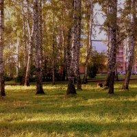 Осень в роще . :: Мила Бовкун