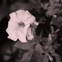 Бабочка на цветке :: Владимир Марков